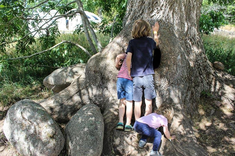Bullerbue-Limonadenbaum