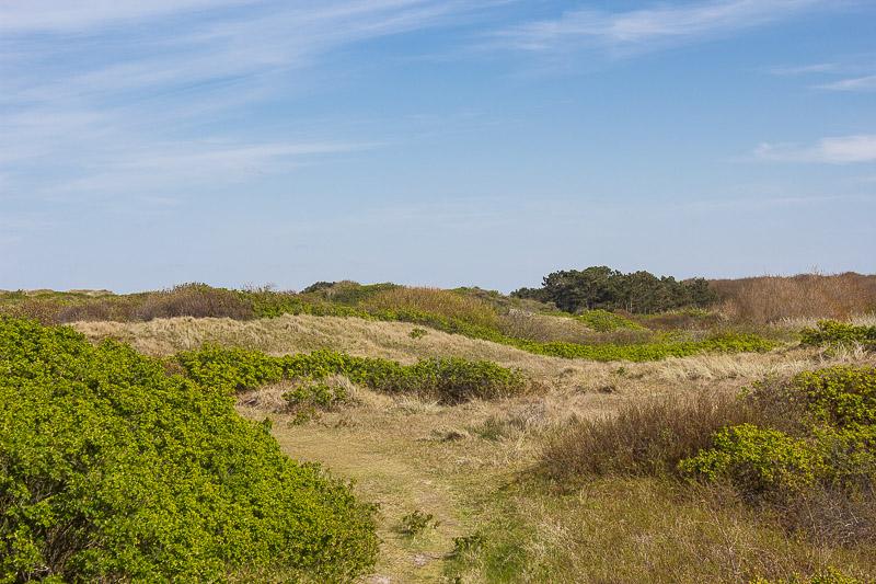 Duenen auf der Insel Wangerooge.