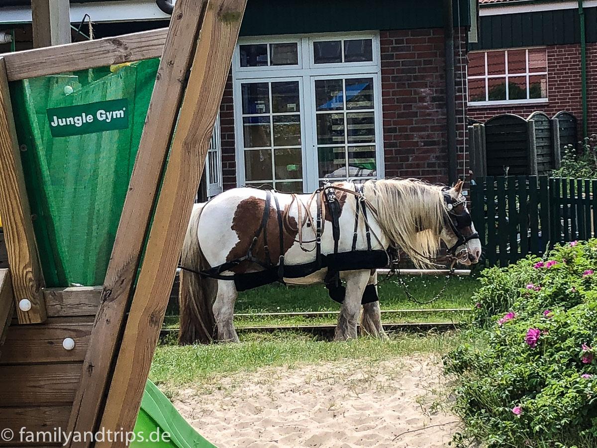 Pferde der Pferdebahn auf Spiekeroog.